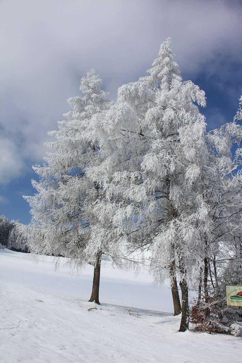 Black Forest Blog | Entries tagged as winter